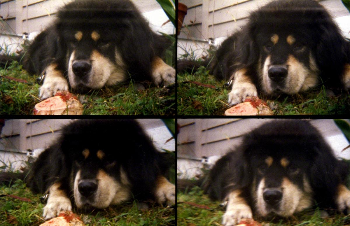 Four Views of Goochie