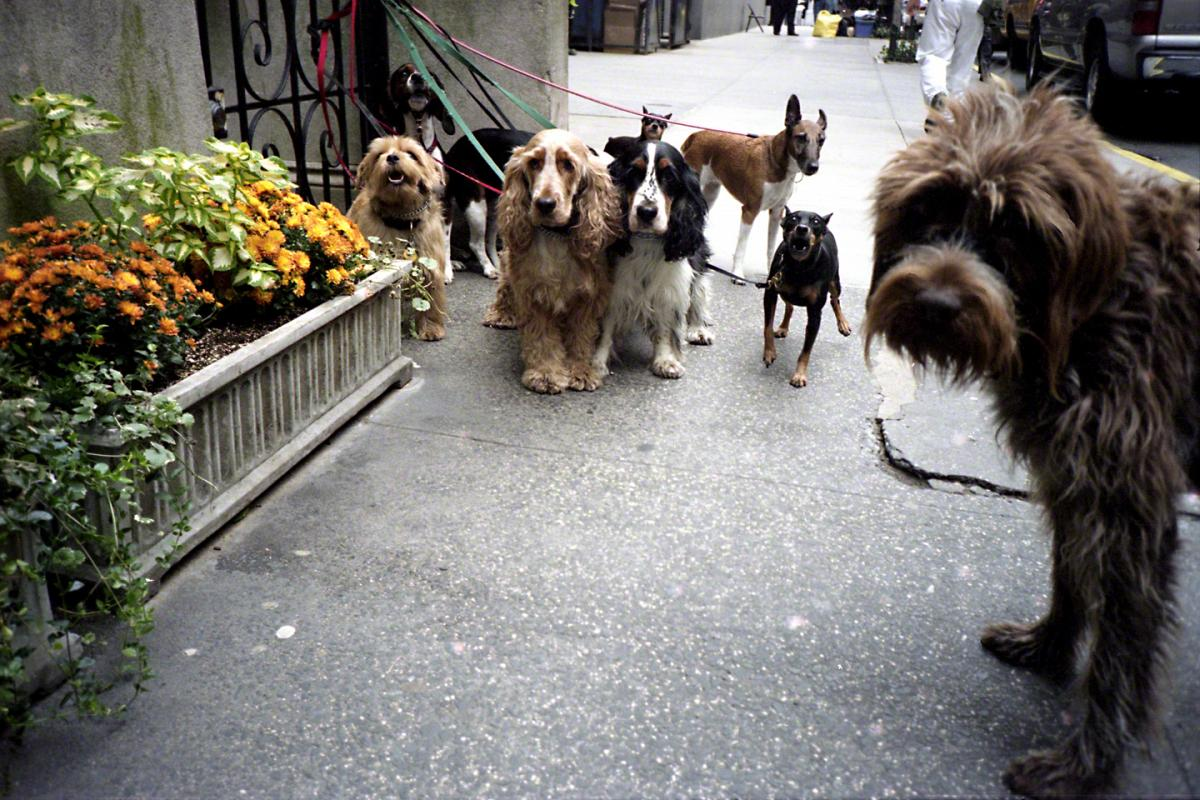 NYC Dogs